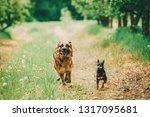 brown german shepherd and... | Shutterstock . vector #1317095681