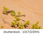peringuey's adder   bitis... | Shutterstock . vector #1317223541