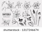 daffodils hand drawn sketch.... | Shutterstock .eps vector #1317246674