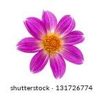 beautiful flower on a white... | Shutterstock . vector #131726774