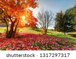 autumn and spring in one image  ... | Shutterstock . vector #1317297317