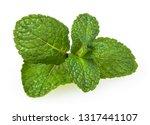 fresh spearmint leaves isolated ... | Shutterstock . vector #1317441107