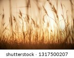 serie m nimo   artistic... | Shutterstock . vector #1317500207