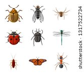 Vector Design Of Insect And Fl...