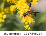 a solitary wasp feeding nectar... | Shutterstock . vector #1317545294