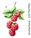Brunch Of Two Ripe Raspberries...