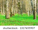 forest in early spring. | Shutterstock . vector #1317655907