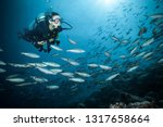 young woman scuba diver... | Shutterstock . vector #1317658664