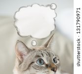 Cute Tabby Cat At Home   Layin...