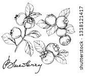 vector blueberry black and...   Shutterstock .eps vector #1318121417