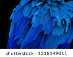 Close Up Feather Macaw Colorfu...