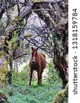 horse in a polylepis forest at... | Shutterstock . vector #1318159784