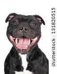 Stock photo smiling staffordshire bull terrier dog portrait 131820515