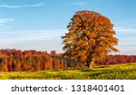 solitary tree in a canola field  | Shutterstock . vector #1318401401