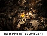 yellow flower  yellow crocus ...   Shutterstock . vector #1318452674