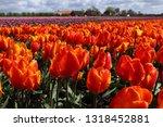 fields of orange and purple... | Shutterstock . vector #1318452881