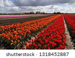 fields of red  orange and... | Shutterstock . vector #1318452887