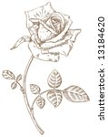 old styled vector rose.... | Shutterstock .eps vector #13184620