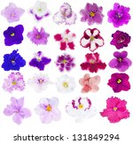 Stock photo set of twenty four violet isolated flower 131849294