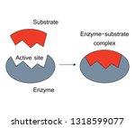 lock and key model enzyme... | Shutterstock .eps vector #1318599077