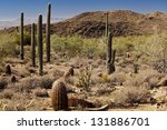 Barrels  Saguaros And Chollas...