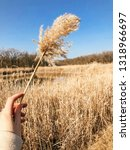 sprig of reed in hand  lake... | Shutterstock . vector #1318966697