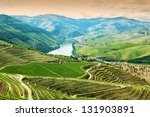 vineyards in douro valley ...   Shutterstock . vector #131903891