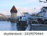 Stock photo seagulls in luzern lucerne with kapellbridge kapellbr cke in background in winter 1319070464