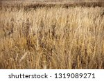 background of dry steppe grass  ...   Shutterstock . vector #1319089271