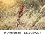 background of dry steppe grass  ...   Shutterstock . vector #1319089274