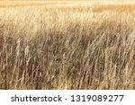 background of dry steppe grass  ...   Shutterstock . vector #1319089277