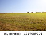 twisted yellow haystack on...   Shutterstock . vector #1319089301