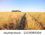 yellow dry grass in the field ...   Shutterstock . vector #1319089304