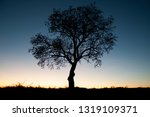 beautiful and peaceful dark... | Shutterstock . vector #1319109371