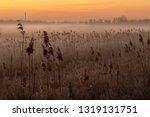 Misty Morning Reed Field...