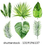 Exotic Leaves Set. Watercolour...