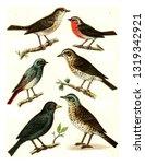nightingale  robin  black... | Shutterstock . vector #1319342921