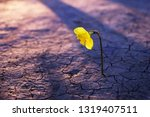 flower grows from a crack in... | Shutterstock . vector #1319407511