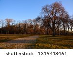 trees on a meadow at a sunny...   Shutterstock . vector #1319418461