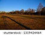 trees on a meadow at a sunny...   Shutterstock . vector #1319424464