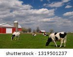 Vaughan, Ontario, Canada, Herd of Hostein dairy cows in a farm pasture with a large red barn