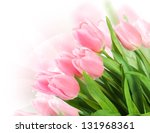 Fresh Spring Tulip  Flowers As...