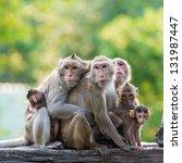 monkey family | Shutterstock . vector #131987447
