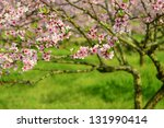Peach Blossom Bloom In An...