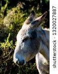 donkey in the field on a sunny... | Shutterstock . vector #1320027887