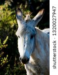 donkey in the field on a sunny... | Shutterstock . vector #1320027947