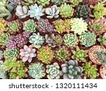 collection of small decorative... | Shutterstock . vector #1320111434