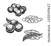 hand drawn set of macadamia... | Shutterstock .eps vector #1320195617
