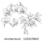 hand drawing orchid flower | Shutterstock .eps vector #132025865