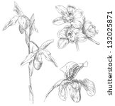 hand drawing orchid flower | Shutterstock .eps vector #132025871